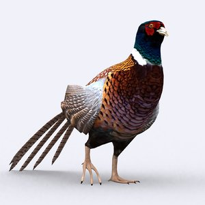 pheasant - 3D model