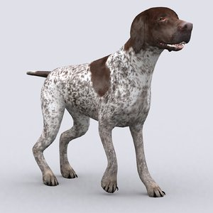 3D model german pointer dog -