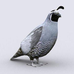 3D quail - model