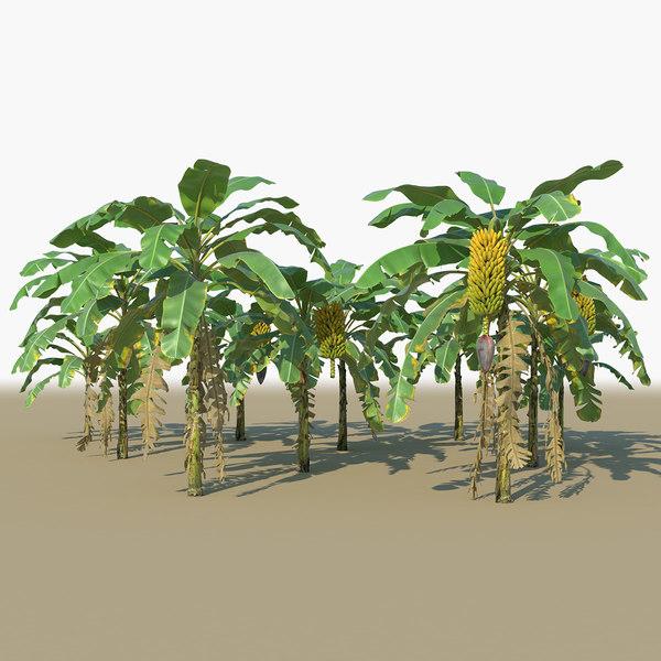 banana plants trees animation 3D model