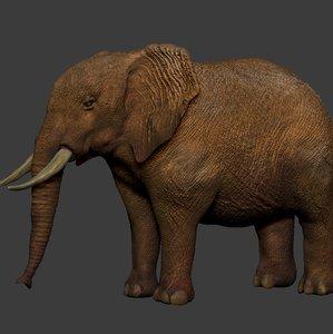 3D african elephant ocher white