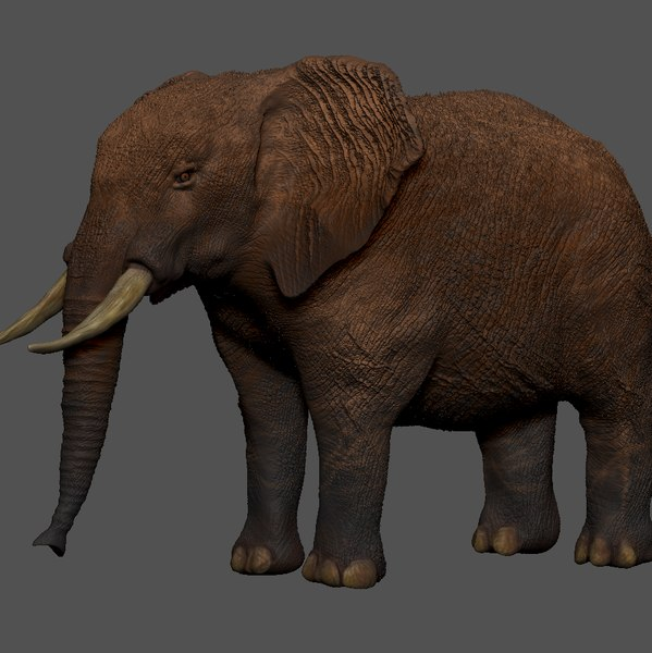 african elephant grey ocher 3D model