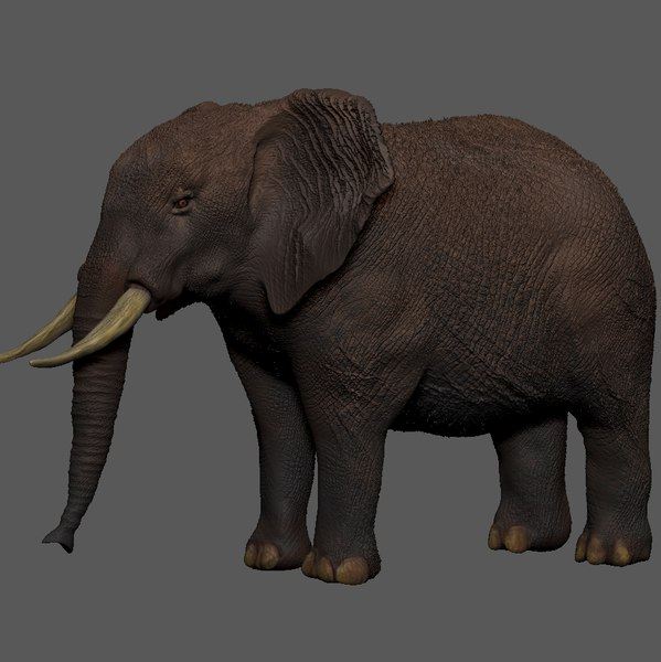 african elephant grey brown 3D