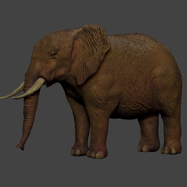 african elephant ocher brown 3D model