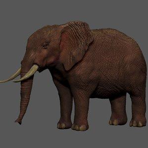 3D african elephant brown l257 model