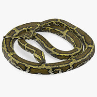 green python snake rigged 3D