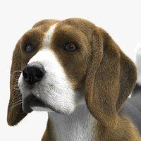 beagle ornatrix ephere 3D model