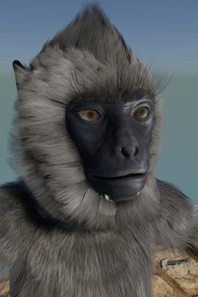 langur monkey animals model