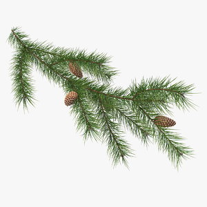 pine branch cones 3D model