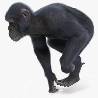 chimpanzee running dark skin 3D