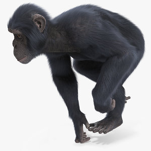 chimpanzee running dark skin 3D