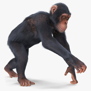 3D chimpanzee running light skin fur model