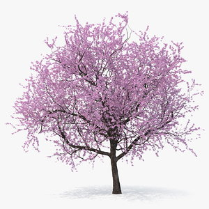 3D model flowering cherry tree