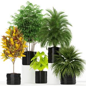3D plants 183