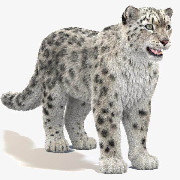 3D snow leopard furry modeled model