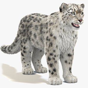 3D snow leopard furry modeled model