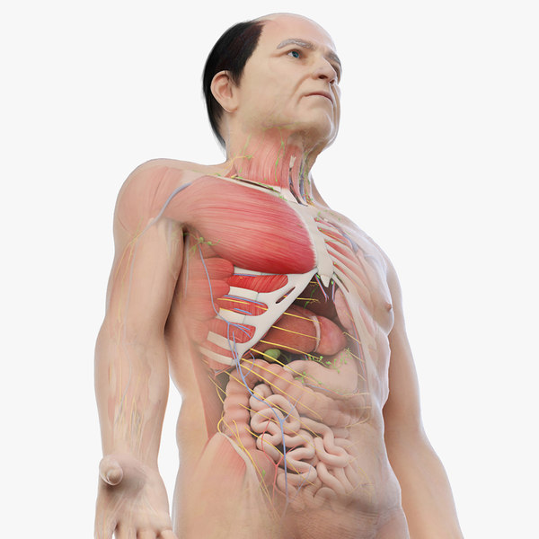 3D elder male anatomy