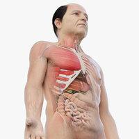 Full Elder Male Anatomy