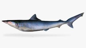 pacific sharpnose shark rhizoprionodon model