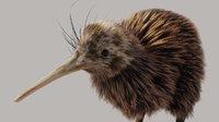 Kiwi Bird Rigged