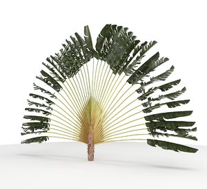 3D palmeira leque