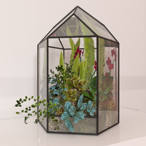 3D floriana orchids model