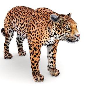 jaguar panthera 3D