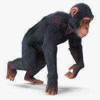 3D chimpanzee walks light skin fur model