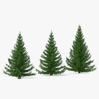 spruces coniferous evergreen 3D model