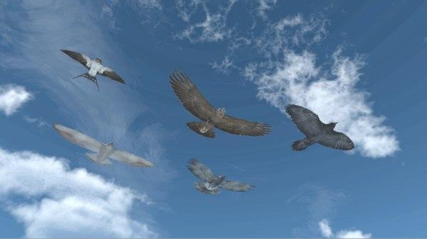 vr soaring birds - 3D model