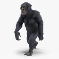 3D chimpanzee walking animal dark