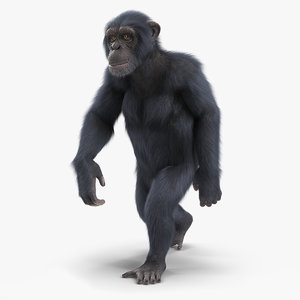 3D chimpanzee walking animal dark