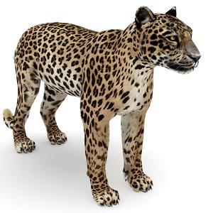 leopard max