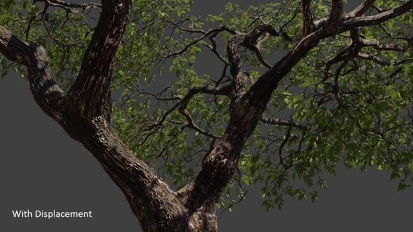 3D realistic tree 2