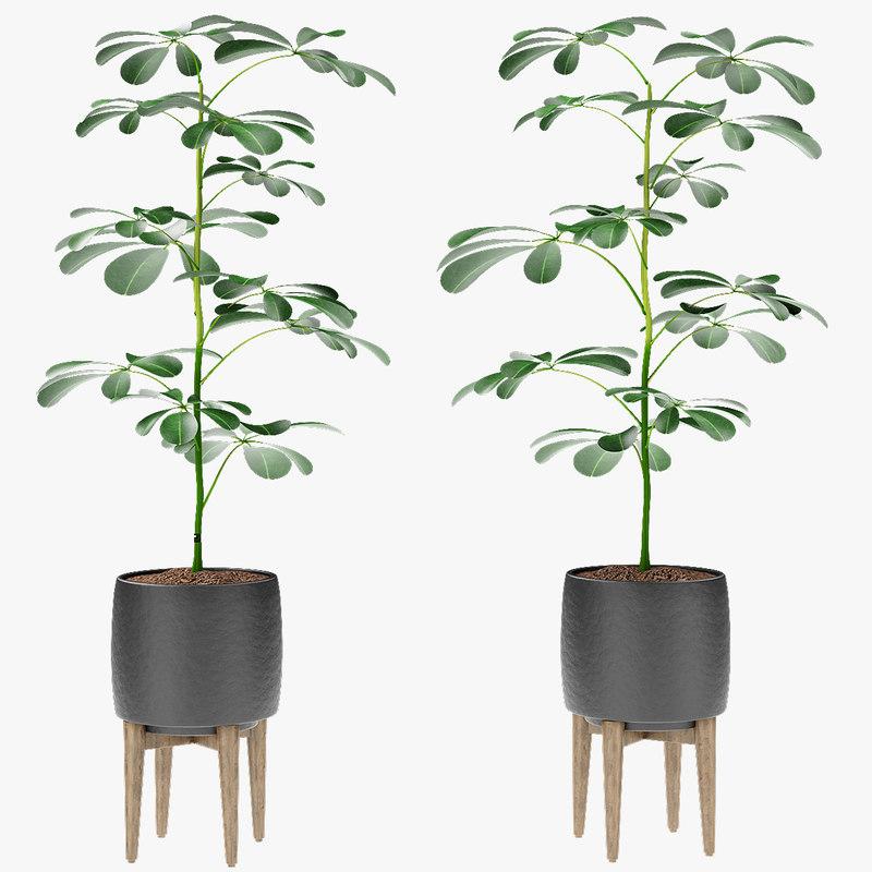 3D plant pot flowerpot exotic model