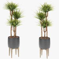 3D model exotic plants palm pot