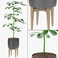 3D plant pot flowerpot exotic