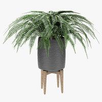 3D exotic plants palm pot model