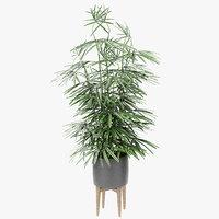 3D exotic plants palm pot