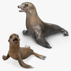 3D sea lion baby model