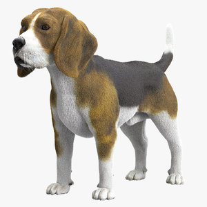 3D beagle fur hair