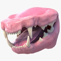 3D realistic cat mouth model