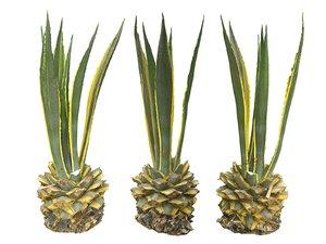tropical plants scan 8k model