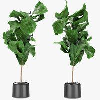 exotic plants palm pot model