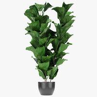 exotic plants palm pot 3D