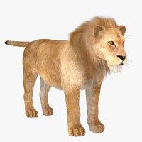vary lion fur 3D model