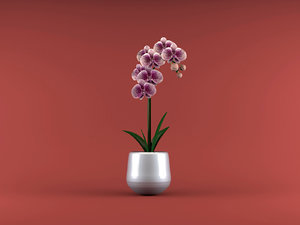 3D model orchid flower