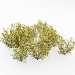 broom snakeweed 3D model
