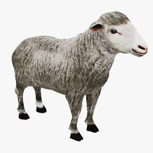 realistic sheep 3D model
