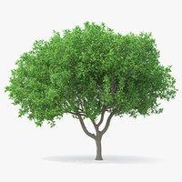 3D model orange tree flowers